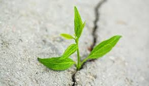Adversity is the Catalyst for all Success featured image